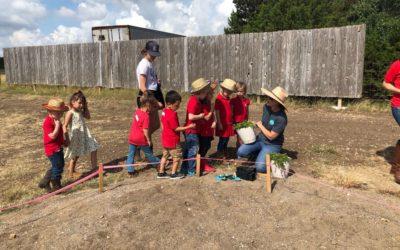 A Farm Visit | Una visita a la granja